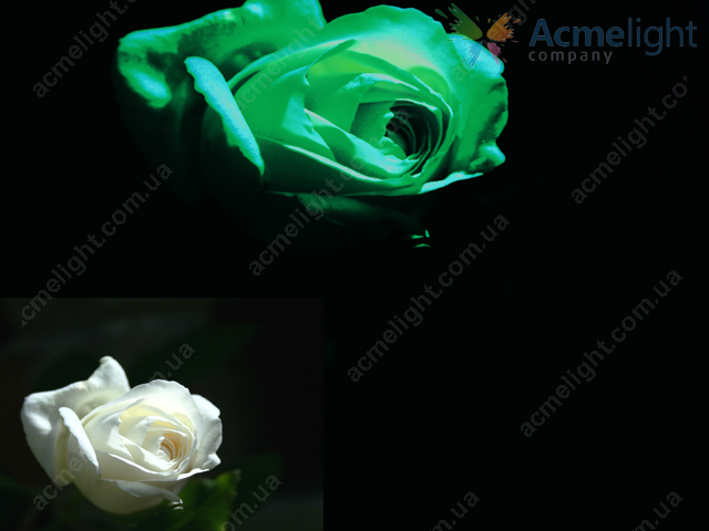 glowing-flowers-3